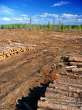 Michigan Northwoods Logging Operation Stock Photography