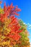 Michigan spadku kolory fotografia royalty free