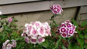 Michigan trädgårdflora Royaltyfri Foto