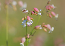 Michigan wild flowers Royalty Free Stock Images