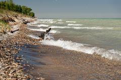 Michiganseetreibholz, das mit Wellen am sonnigen Tag gespritzt wird stockfoto