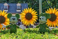 Mickey en Minnie-cijfer van de muis topiary vertoning aangaande vertoning in Disney World stock foto