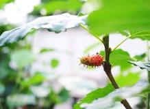 Micky mouse flower Stock Photo