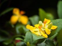 Mickymaus pflanzt Blumen Stockfotos