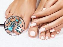 Micróbios em mostras de pés fêmeas mygnifying o vidro Fotografia de Stock Royalty Free