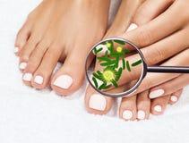 Micróbios em mostras de pés fêmeas mygnifying o vidro Fotos de Stock Royalty Free