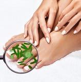 Micróbios em mostras de pés fêmeas mygnifying o vidro Foto de Stock Royalty Free