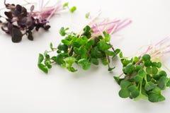 Micro зеленеет разнообразие на белой предпосылке Стоковое фото RF