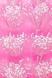 micro изображения щетки щетинок Стоковые Фото