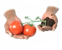 Micro Agriculture Royalty Free Stock Photos