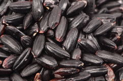 Micro Of Black Rice. Micro shot of grains of black rice Royalty Free Stock Photography