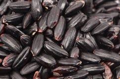 Micro di riso nero Fotografia Stock Libera da Diritti