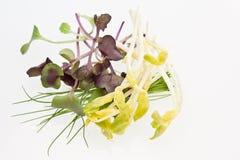 Micro ervas Fotografia de Stock