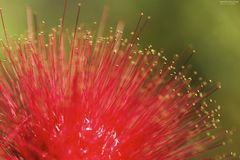 Micro för förälskelse för blommanaturskapelse Arkivfoto