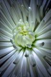 Micro för vit blomma Arkivbilder