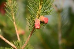 Micro flor vermelha!! Imagens de Stock Royalty Free