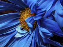 Micro Focus Photography of Blue and Orange Petaled Flower royalty free stock photos