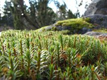 Micro forest Stock Images