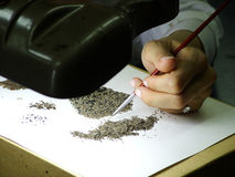 Micro Fossil Search. Looking for micro fossils in sand Royalty Free Stock Photography