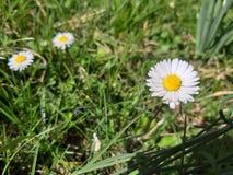 A micro fotografia de flores da mola differen dentro cores foto de stock