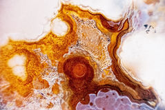 Micro geode da ágata Fotos de Stock