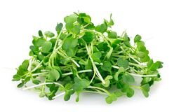 Free Micro Green Arugula Isolated On White Background Stock Photos - 170964223