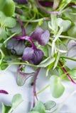 Micro greens close-up Stock Photos