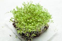 Micro groen als stimulans van immuniteit tijdens de de lenteperiode op een wit stuk van document Close-up royalty-vrije stock foto's