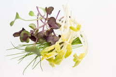 Micro Herbs. A selection of micro herbs including garlic chives, peashoots & radish cress Stock Photography