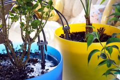 Micro Irrigation System. For Home Plants Watering in process Stock Photo