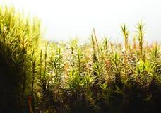 Micro landscape Stock Image