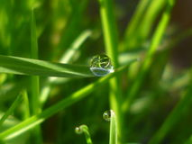 Micro Orb. Close up of morning dew Royalty Free Stock Photo