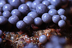 Micro-organism fungus mold. Structure Stock Photography