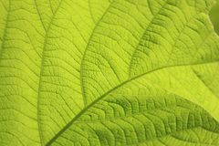 Micro Photography of Green Leaf Stock Photography