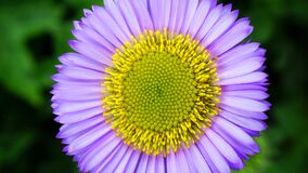 Micro Photography Purple and Yellow Flower Royalty Free Stock Photos