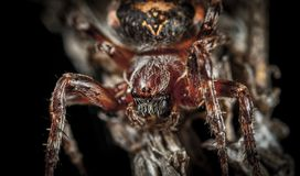 Micro Photography of Spider Royalty Free Stock Image