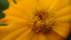 Micro pic stock image
