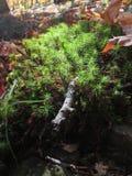 Micro planta Fotos de Stock