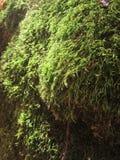 Micro planta Fotografia de Stock