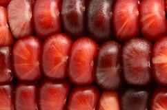 Micro Red And Black Indian Corn. Micro of red and black and other colors Indian Corn Royalty Free Stock Photography