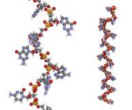 Micro RNA (mir-423-5p) molecule Stock Photography