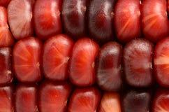 Micro- Rode en Zwarte Maïs Royalty-vrije Stock Fotografie