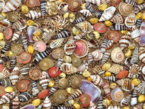 Micro- Seashells On A Sandy Beach Royalty Free Stock Image