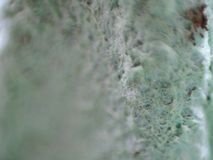 Micro Egg Carton Dirty Green stock photos
