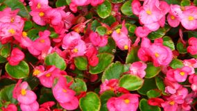Micro shot of the Flowers stock video footage