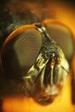 Micro shot of fly. Head royalty free stock photos