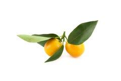 Micro tangerines Fotografia de Stock Royalty Free