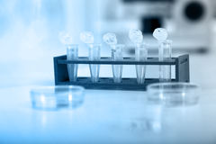 Micro tubes with biological samples in laboratory Stock Photos
