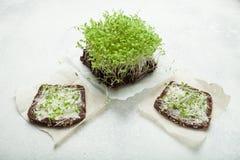 Micro-verde fresco e dois sanduíches em um fundo branco Estilo de vida saudável fotos de stock royalty free