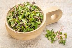 Micro verdes orgânicos Imagens de Stock Royalty Free